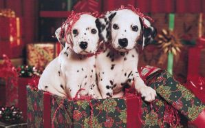 Free Christmas Puppy wallpaper