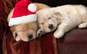 Free Cute Little Christmas Puppies wallpaper
