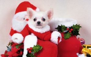 Free Cute Christmas Puppy Picture wallpaper