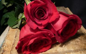 Free Romantic Valentine's Day Rose Image wallpaper