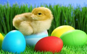 Free Easter Day Chick Picture wallpaper