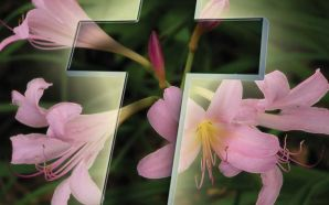 Free Easter Day Lily Image wallpaper