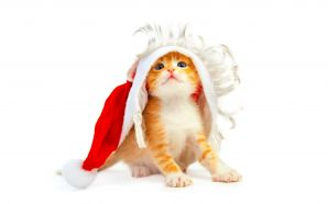 Christmas and Happy New Year - Funny Christmas Cat