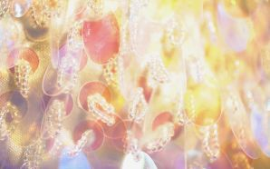 Sparkling and Romantic Backgrounds HK054 350A