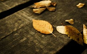 Free Autumn Tree Leaves Pictures wallpaper