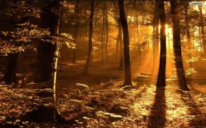 Free Thick Forest Images wallpaper