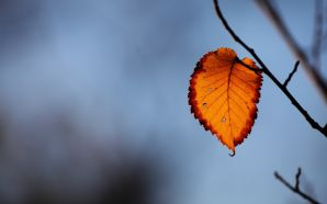 Autumn Free Wallpaper - Last Autumn Leaf