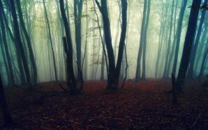 Autumn Free Wallpaper - foggy forest