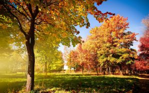 Autumn Free Wallpaper - Autumn Colors