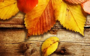 Autumn Free Wallpaper - colors of autumn