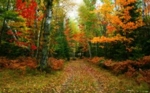 Autumn Free Wallpaper - Path In The Forest