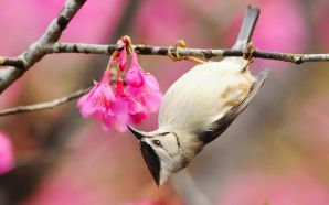 Dream Spring 2012 - spring flowers and bird