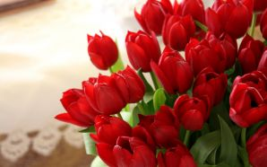 Dream Spring 2012 - red tulips