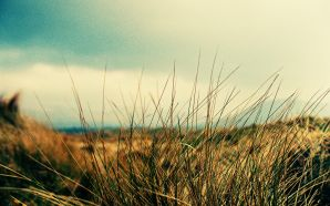 Lomography mullaghmore grass