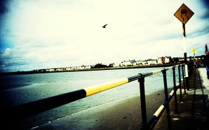 Lomography seagul in sky