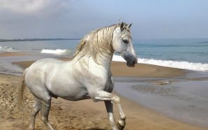 white horse by the sea