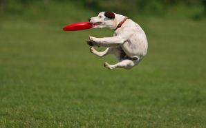 Funny Doggy catching