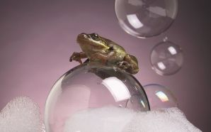 a frog standing on a bubble