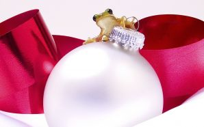 a frog on a christmas ornament