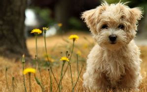 Lovely breeds of Dog