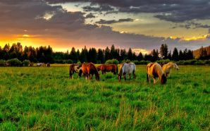 Horse wallpaper - Lovely Sunset