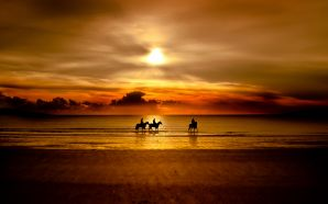 Horse wallpaper - Golden Sunset