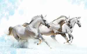Horse wallpaper - White horses runing