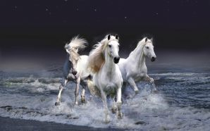 Horse wallpaper - White horses