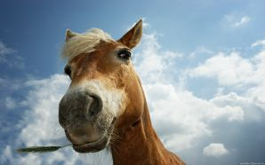 Horse wallpaper - Funny Little Horse