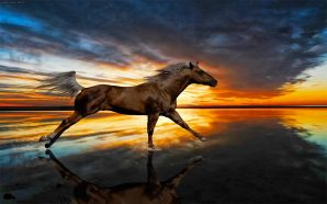 Horse wallpaper - Horse Of Reflection
