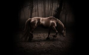 Horse wallpaper - Horse alone