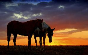Horse wallpaper - horse sunset