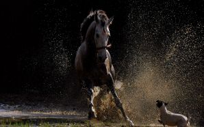 Horse wallpaper - horse vs dog